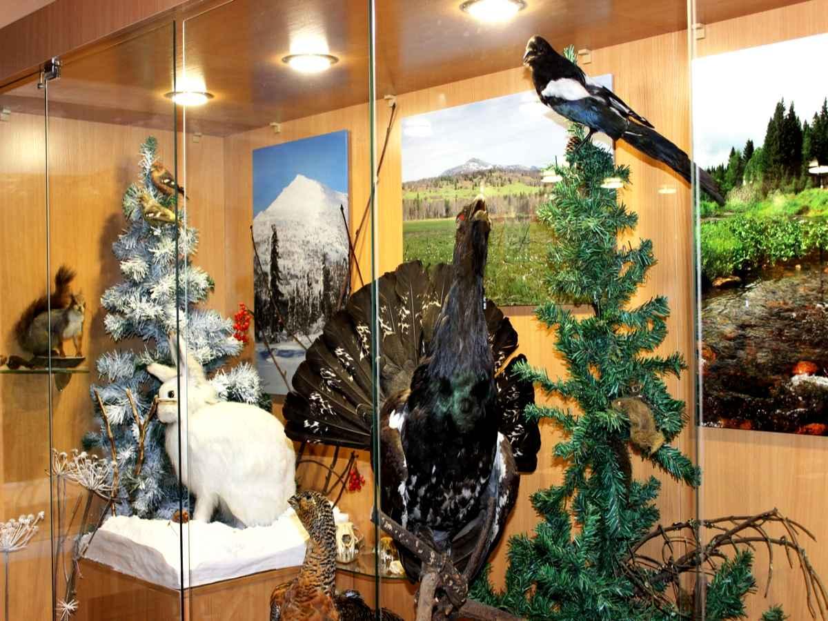 Обновлена музейная экспозиция в визит-центре заповедника