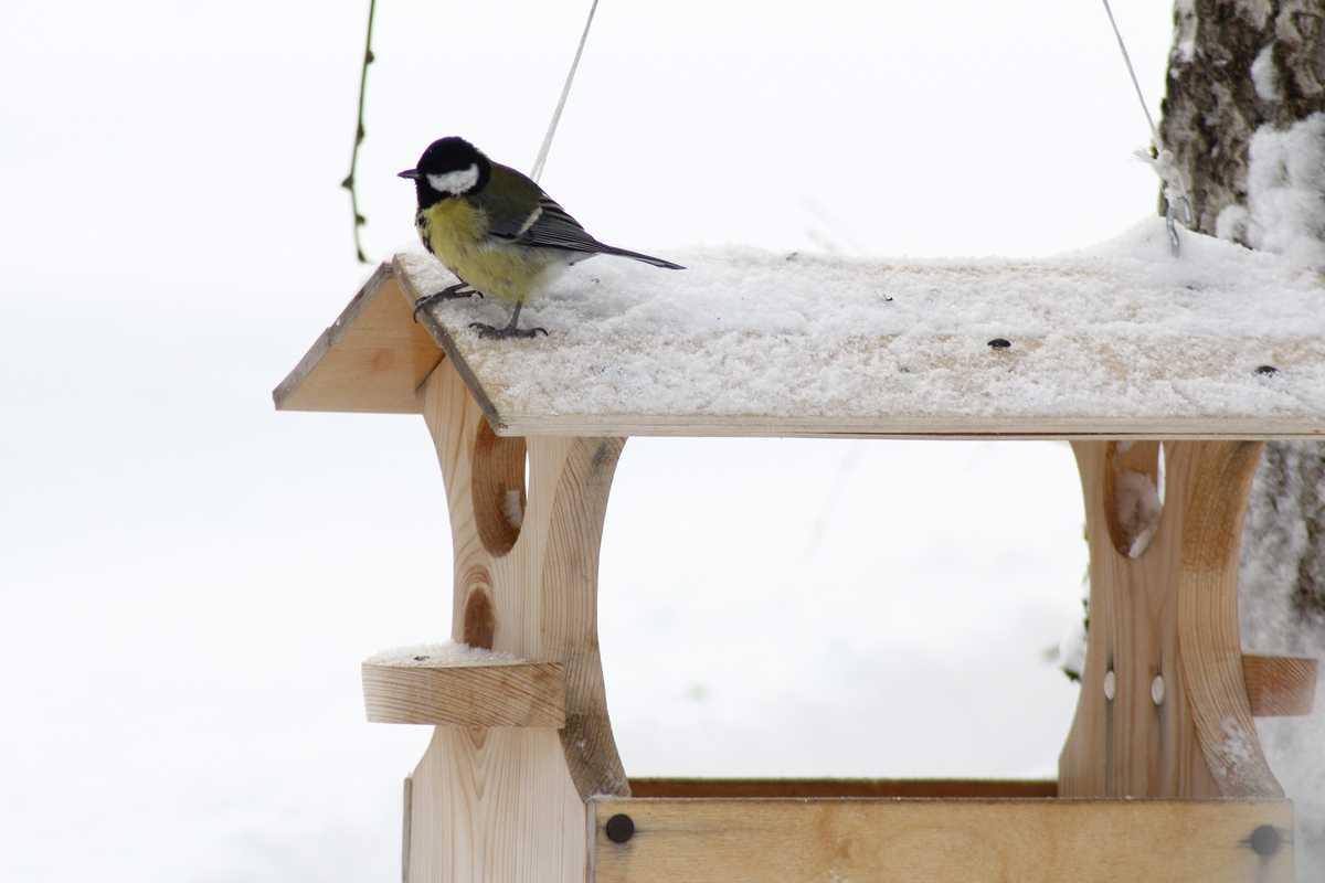 Как мы птицам помогаем