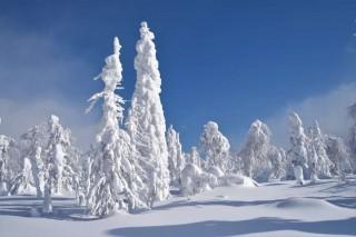В заповедном лесу. Автор Ярослав Кутузов