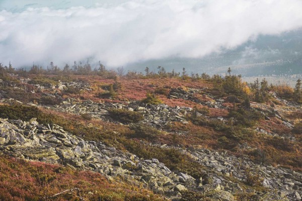 Осенние краски. Автор Лев Арамилев