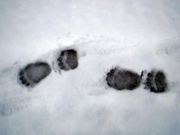 Медведь проснулся Автор В. Семёнов