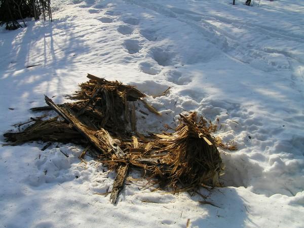 Медведь разворошил пень Автор В. Семёнов